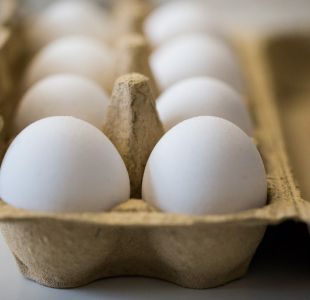Científicos japoneses desarrollan medicinas en huevos de gallina