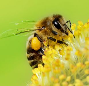 La sorprendente habilidad de las abejas para entender el concepto cero