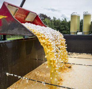 Alerta alimentaria: Escándalo de huevos contaminados con pesticidas afecta a 17 países