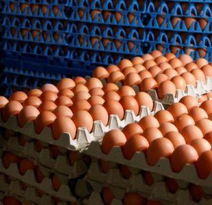 Huevos contaminados: La Haya prolonga arresto de empresarios