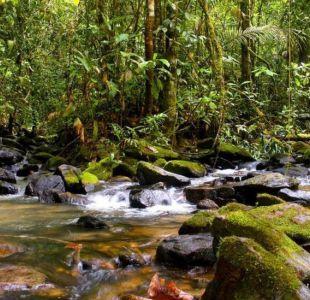 Brasil: suspenden polémico decreto que abría a la minería una valiosa reserva de la Amazonía