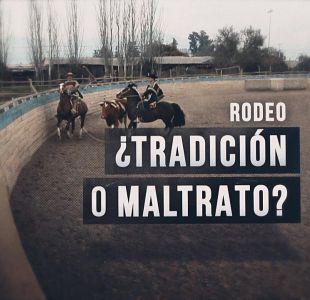 [VIDEO] Reportajes T13: ¿Tradición o maltrato? las dos caras del rodeo