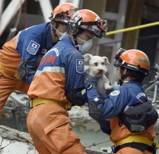 [FOTOS] Hallazgo de perro da esperanza y alegría a rescatistas de terremoto en México