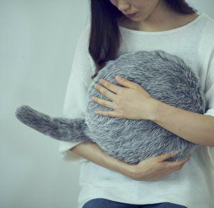 ¿No puedes tener un gato en tu departamento? Esta almohada podría ser tu solución