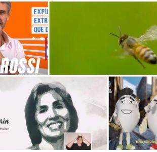 Corpóreos, una abeja y la PLR Radical: Los momentos del primer día de franja parlamentaria
