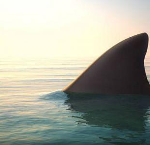 No la cuenta dos veces: joven sobrevive al ataque de un tiburón en Australia