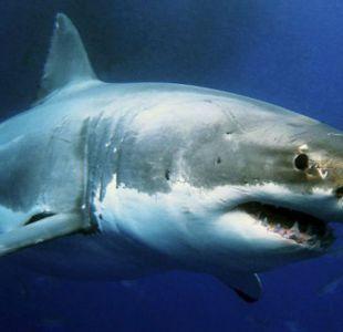 [VIDEO] Niño sale a pescar con su padre y terminan enfrentados a un tiburón blanco