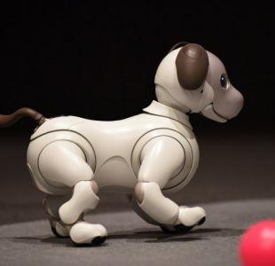 Aibo, el perro robot que Sony vuelve a fabricar