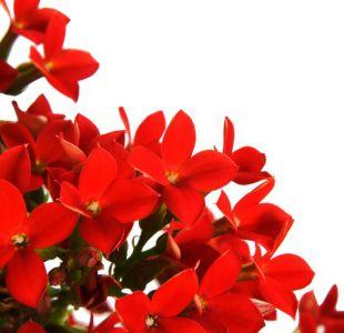 5 plantas que puedes tener en la casa si es que nunca te acuerdas de regarlas