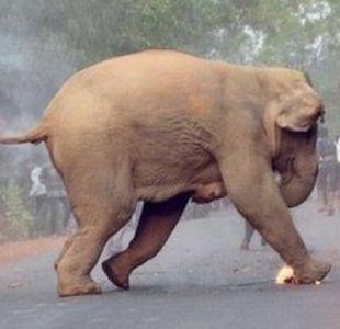 La dramática foto de una cría de elefante en llamas gana premio en India