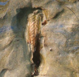 El inesperado descubrimiento de un saltamontes muerto (e inmortalizado) en un cuadro de Van Gogh