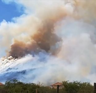 Bomberos y Conaf logran controlar incendio forestal en Chicureo