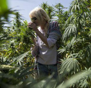 Los turistas se apuntan a la ruta del cannabis en Marruecos