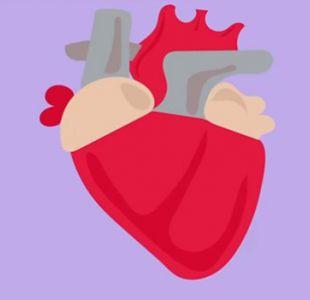 [VIDEO] El primer trasplante de corazón del mundo que cambió la medicina para siempre hace 50 años