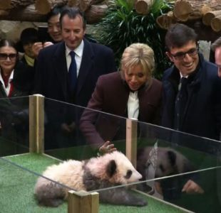 [VIDEO] El accidentado saludo de la primera dama de Francia a un panda