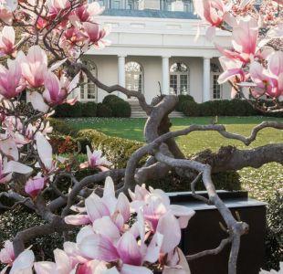 ¿Por qué van a cortar el famoso y centenario árbol de magnolia de la Casa Blanca?