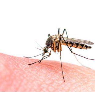Minsal confirma caso de malaria en la región del Biobío