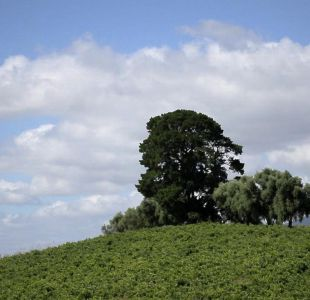 [VIDEO] Hay que ir: Valle del Itata