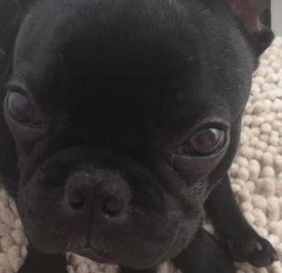 La muerte del perro Kokito en un avión por la que United Airlines admitió responsabilidad