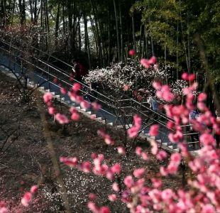 [VIDEO] China da bienvenida a la temporada de flores