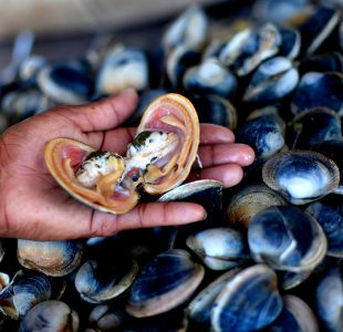 [VIDEO] Marea Roja: Jumbo llama a no consumir almejas frescas de sus locales