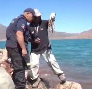 [VIDEO] Así fue la búsqueda de Concepción Arregui