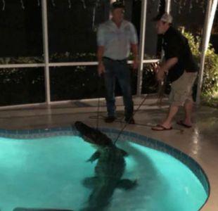 [VIDEO] Cocodrilo causa terror tras escabullirse en la piscina de una familia