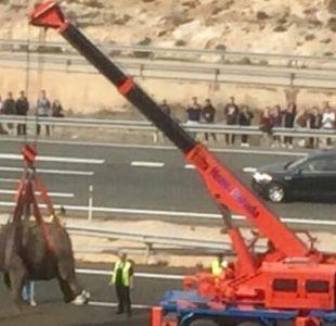 Las insólitas imágenes del inesperado rescate de 5 elefantes accidentados en una autopista de España