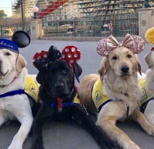 Cachorros sorprenden a turistas y se toman Disneyland