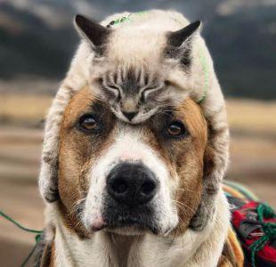 Henry y Baloo: el perro y el gato viajeros que cautivan Instagram por su tierna amistad