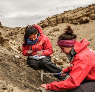 Encuentran restos de dinosaurios intacto en Magallanes