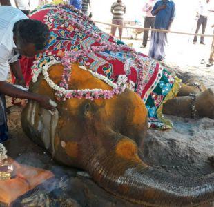 La trágica muerte de la elefanta Rajeshwari muestra las condiciones en la que viven estos animales
