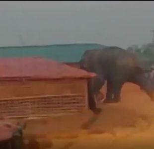 [VIDEO] Los elefantes salvajes que causan muertes y destrozos en un campo de refugiados rohingyas