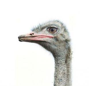 National Geographic revela cómo se logran las fotos perfectas de animales