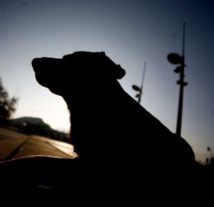 Joven quedó gravemente herida tras ser atacada por más de 15 perros en Iquique