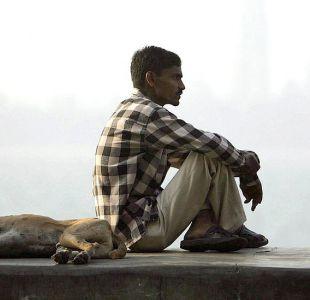 El misterio de las jaurías de perros asesinos a las que culpan de la muerte de 12 niños en India