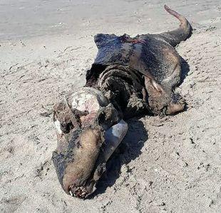 La misteriosa criatura que apareció en una playa de Reino Unido y desconcierta a los científicos