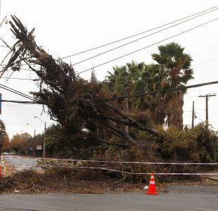 Caída de arboles producto de los fuertes vientos en la Capital