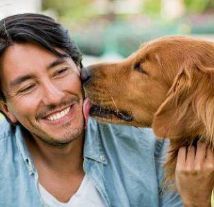 Hidatidosis: La grave enfermedad que puede provocar recibir un lengüetazo de tu perro