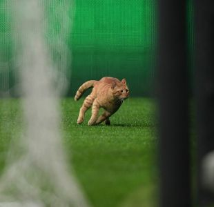 Gato provoca sanción de 34 mil euros al Besiktas de Gary Medel