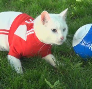 [VIDEO] Aquiles, el gato sordo que intentará emular al pulpo Paul en el Mundial de Rusia