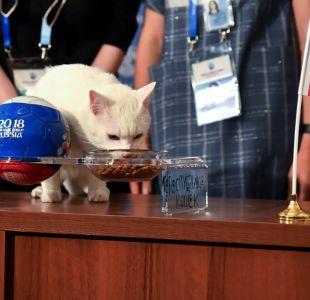 [VIDEO] Gato Aquiles entrega su primera predicción para el Mundial de Rusia
