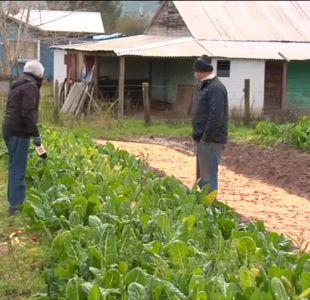 [VIDEO] Heladas subirán el precio de las hortalizas