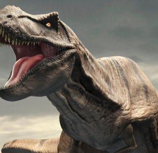 Un mito errado: el temible Tyrannosaurus rex no podía sacar la lengua