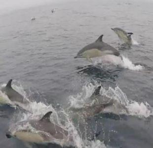[VIDEO] El impresionante avistamiento de más de 3 mil delfines en España