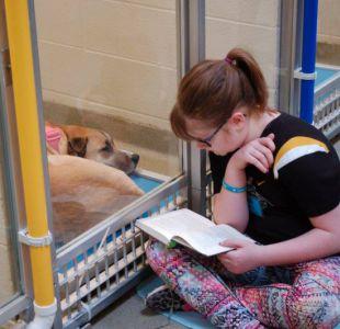 [VIDEO] Niños leen cuentos a perritos abandonados para que sean más sociables y puedan ser adoptados