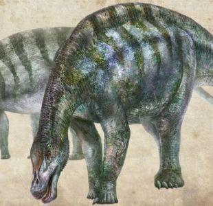 El fósil descubierto en China que obliga a reescribir la historia del supercontinente Pangea