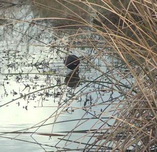[VIDEO] Protegerán cuarenta humedales amenazados