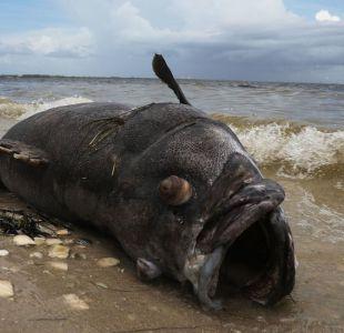 [FOTOS] La histórica marea roja tóxica que invade las paradisíacas playas de Florida
