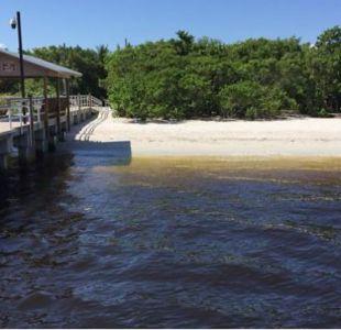 [VIDEO] Así se ve la marea roja tóxica que tiene en emergencia a Florida